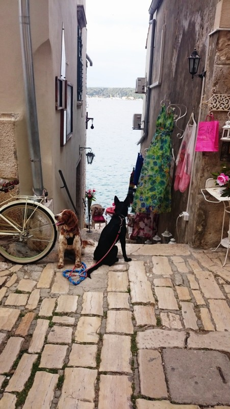 two doggy tourists in Rovinj